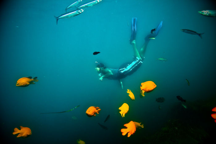 San Diego, La Jolla Underwater Photographer Daniel Woods